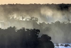 Misty-Jungle