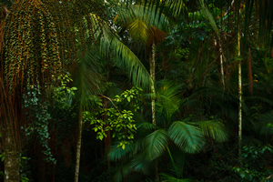 Yacutinga Lodge Iguazu Jungle