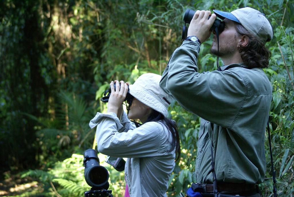 Birding, avistaje, aves de la selva
