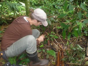 protegiendo-la-selva