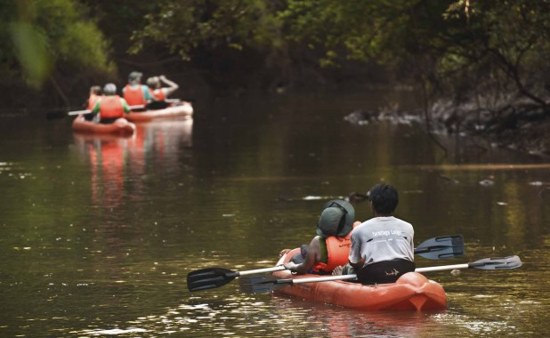Eco tours - Kayaks