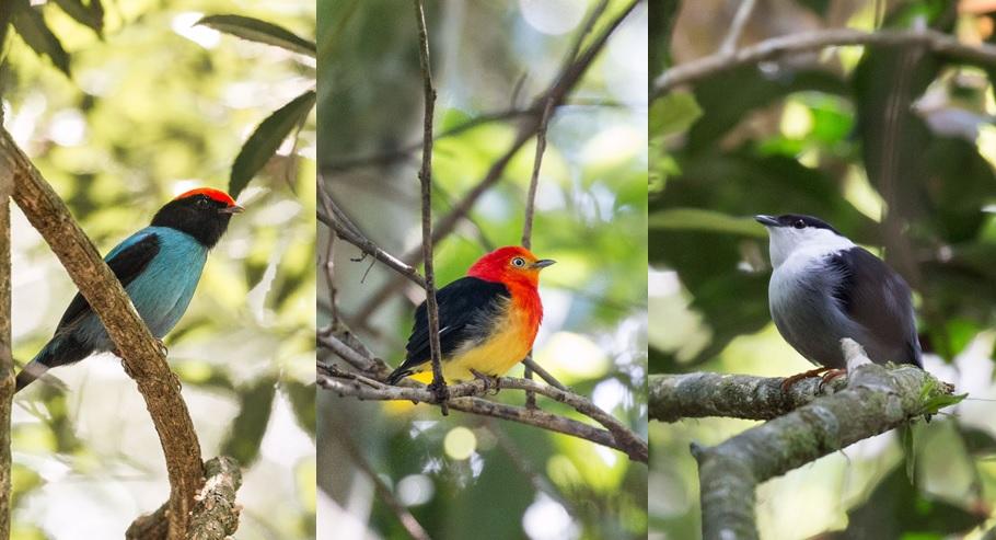 Birding - avistaje - aves - Selva