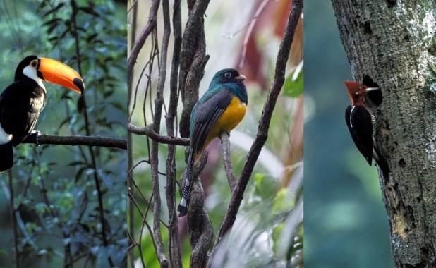 Aves de la Selva Misionera