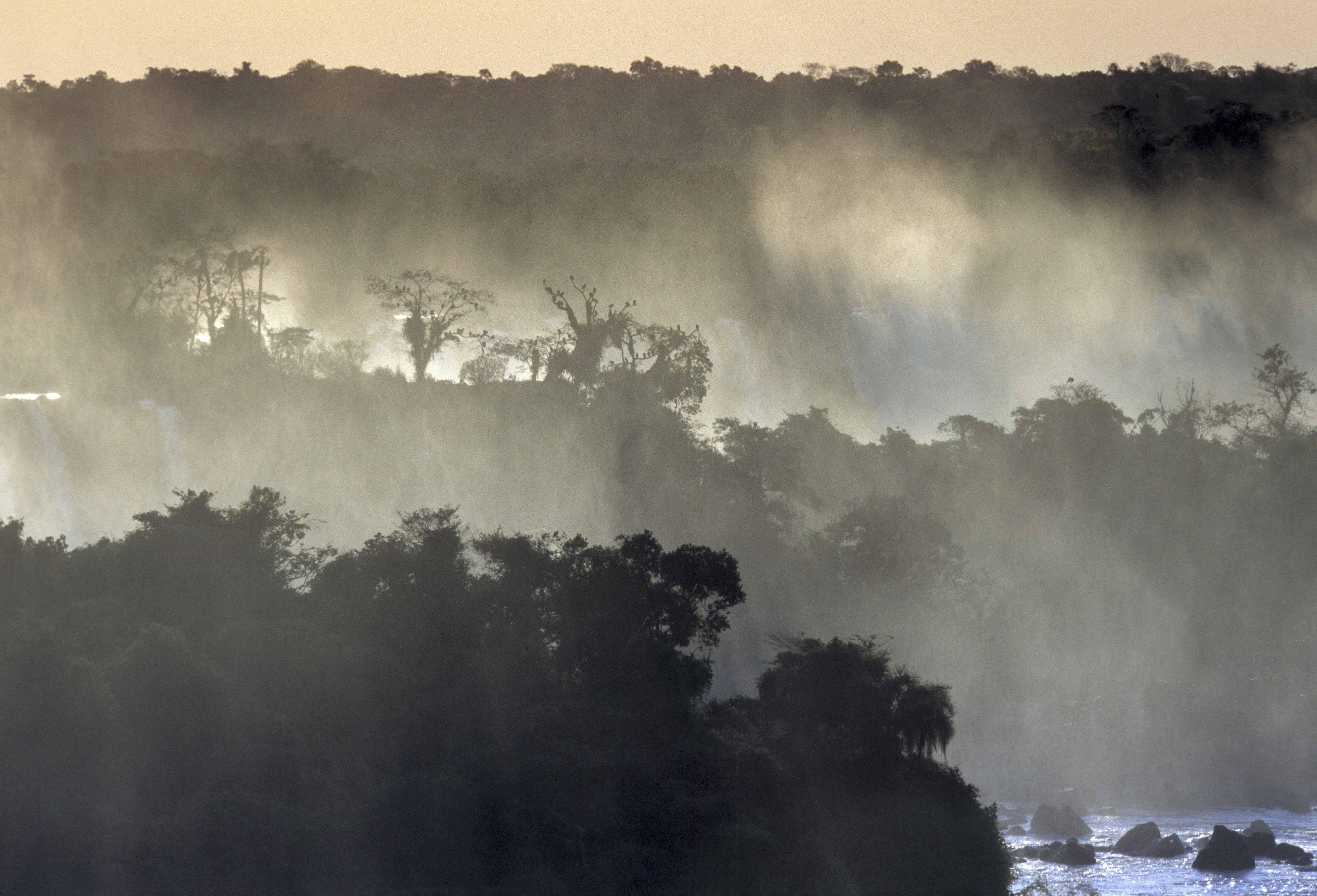 La Selva al borde del Río Iguazú es el ambiente más biodiverso de Argentina.