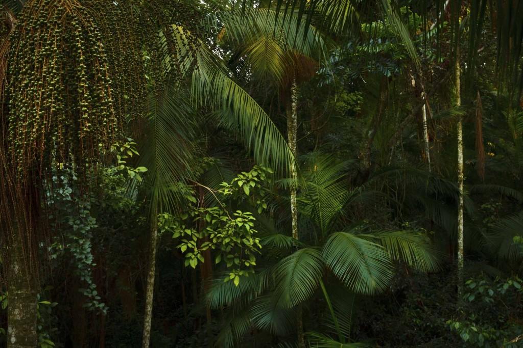 Yacutinga Lodge esta inmerso en un profundo Palmital, hogar de más de 320 especies de aves observadas.