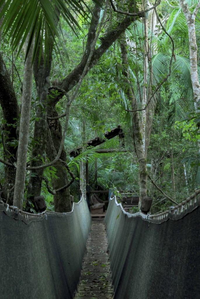 Yacutinga Lodge, la Selva misionera y sus maravillas. Mas información www.yacutinga.com