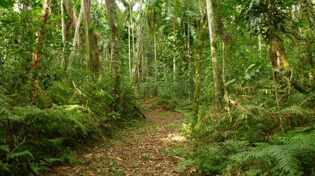 Doce senderos de interpretación permiten al observador de aves realizar excelentes registros dentro de la Reserva Yacutinga.