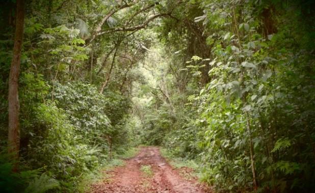 El sendero Principal de la Reserva Yacutinga. Un paraíso para la observación de aves.