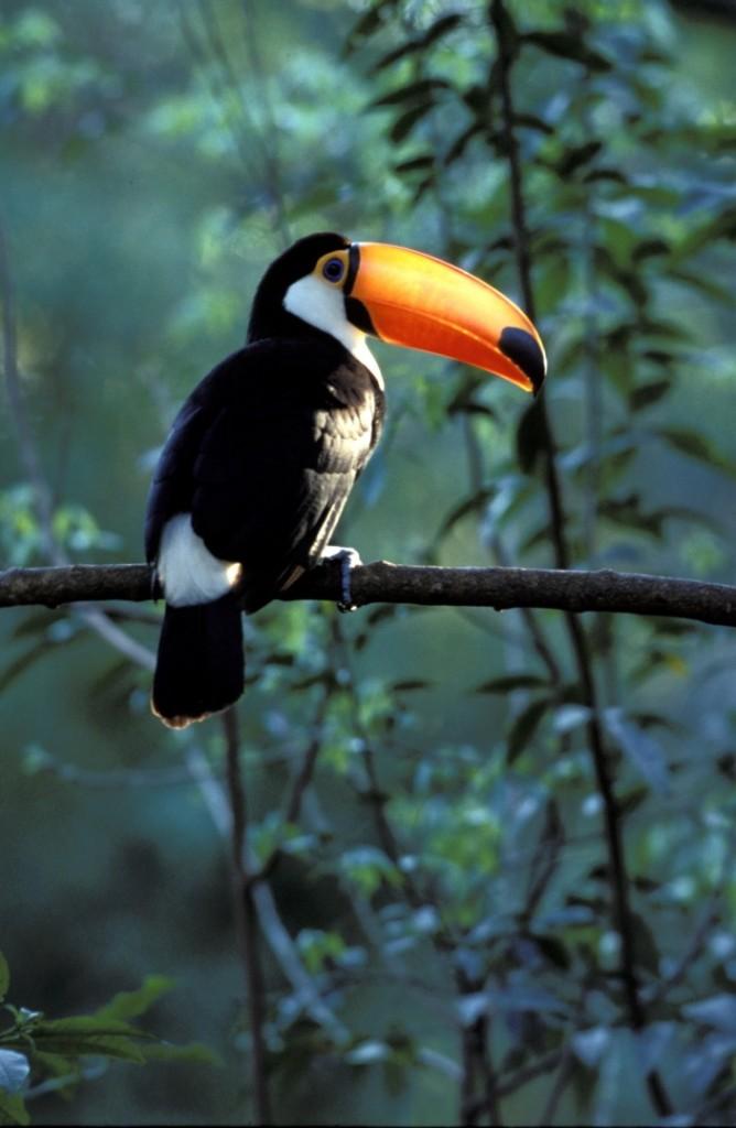 Avistaje de aves - Birding