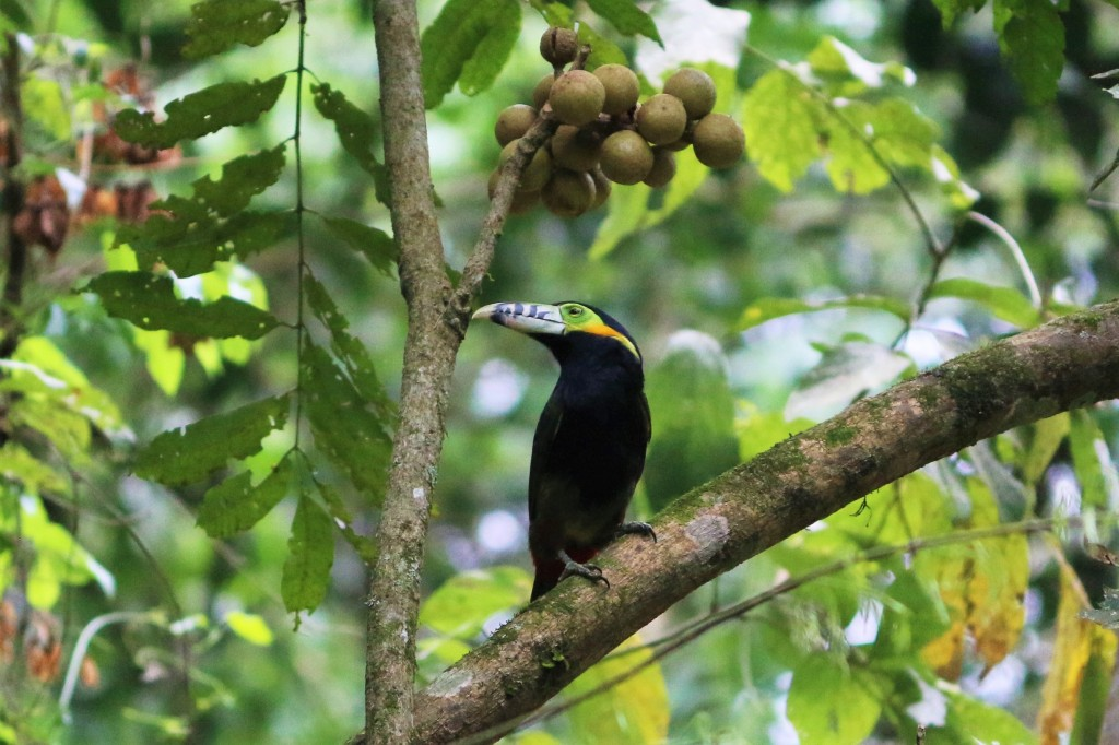 Aves de la Selva