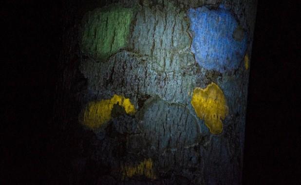 liquen-UV